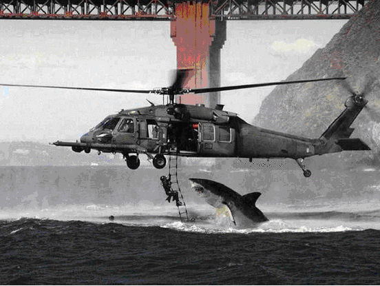 White shark attacking a soldier hanging from a helicopter fiction