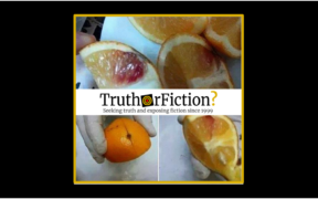 HIV_injected_oranges