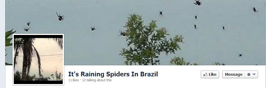 Raining-Spiders