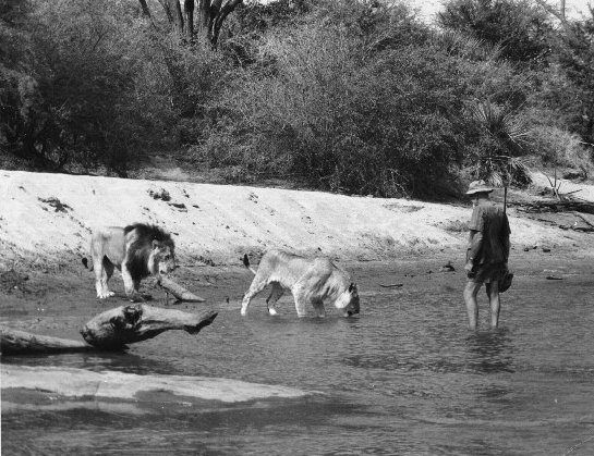 The story of Christian the Lion-Truth!