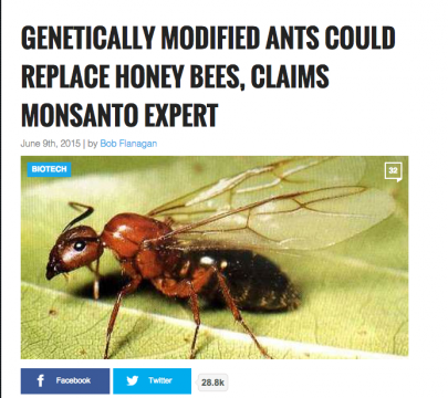 Monsanto Genetically Modified Ants