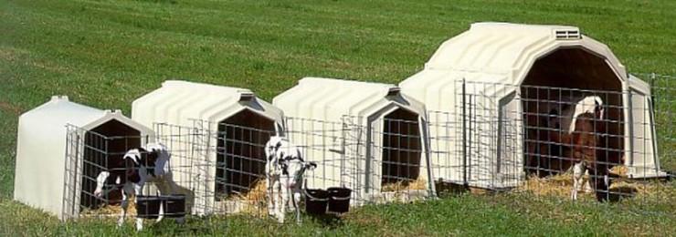 Calf-hutches
