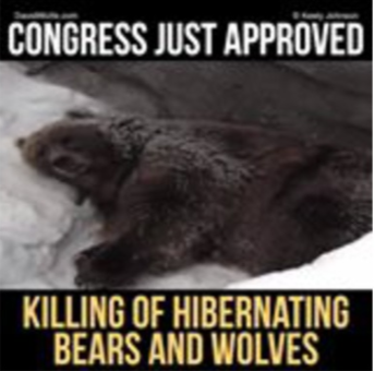congress approves killing hibernating bears and denned