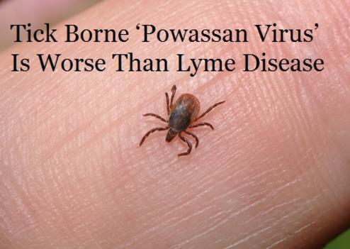 Powassan Virus Warning