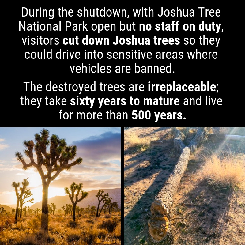 joshua-trees-shutdown
