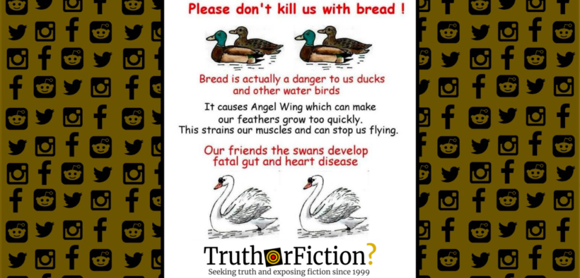 dont_give_bread_ducks