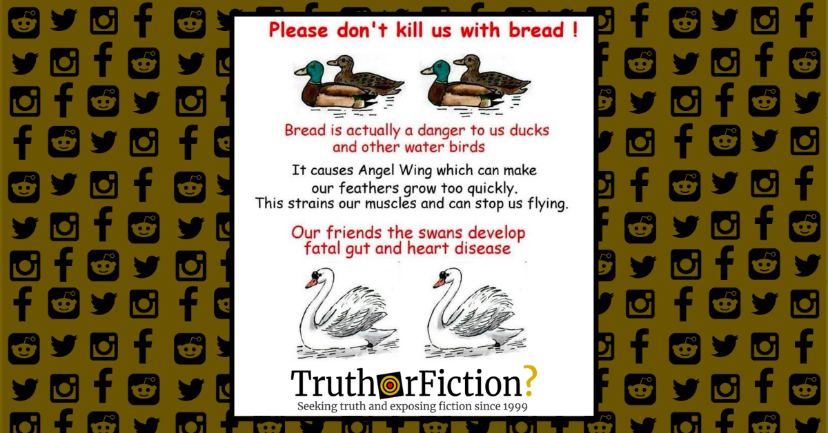 Is Bread Bad for Ducks?