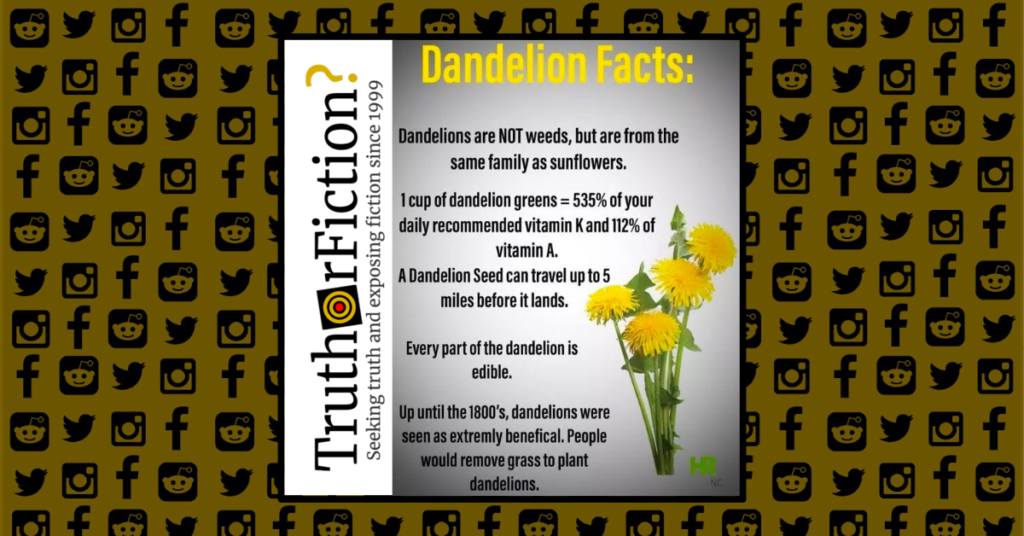 dandelion_facts