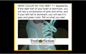 shoe_gray_green_pink_white_left_right_brain