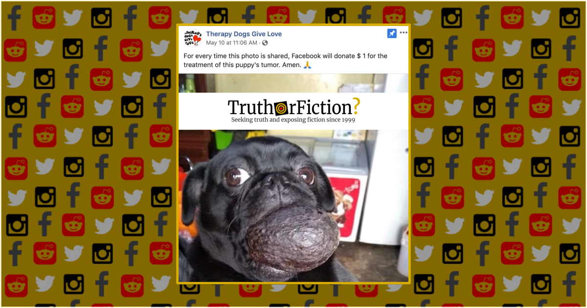 Is Facebook Donating $1 for Every Share Towards a Puppy's Tumor?