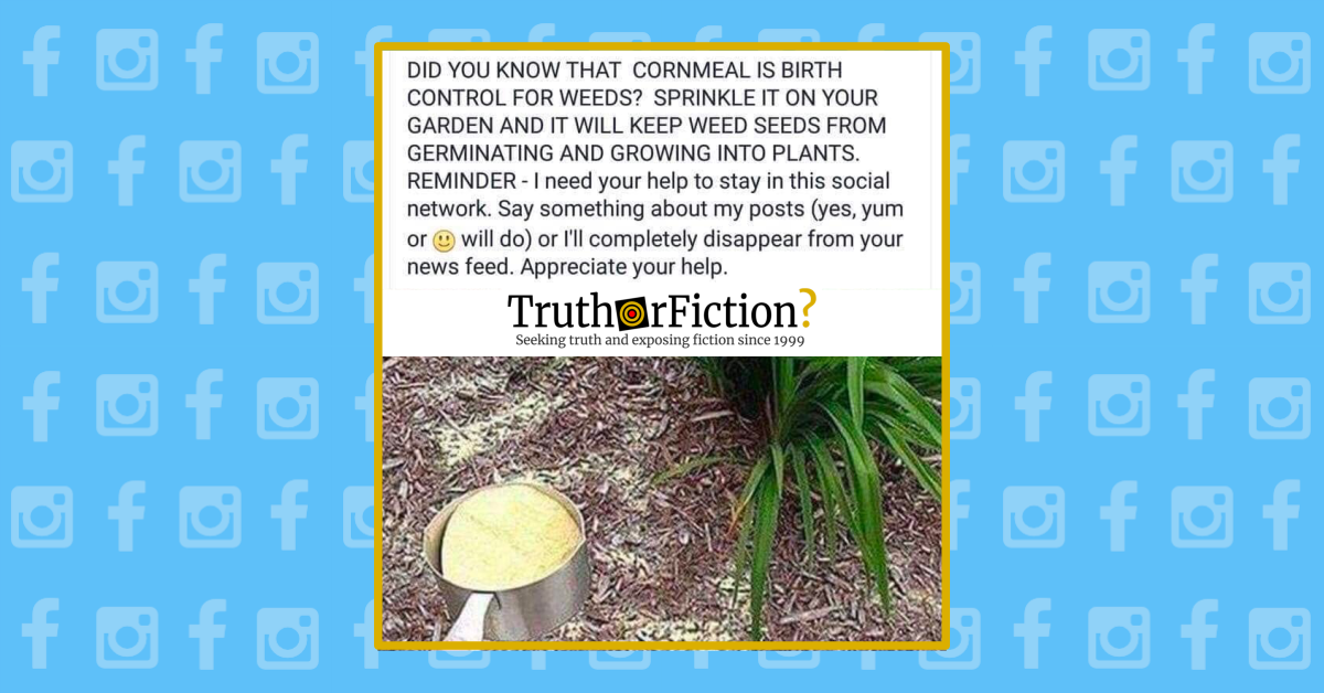 Can You Use Cornmeal to Keep Weed Seeds from Germinating?