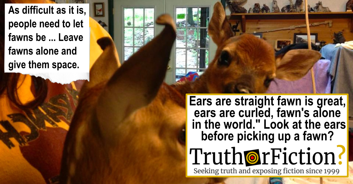 'Ears are Straight, Fawn is Great, Ears are Curled, Fawn is Alone in the World' Wildlife Rescue Meme