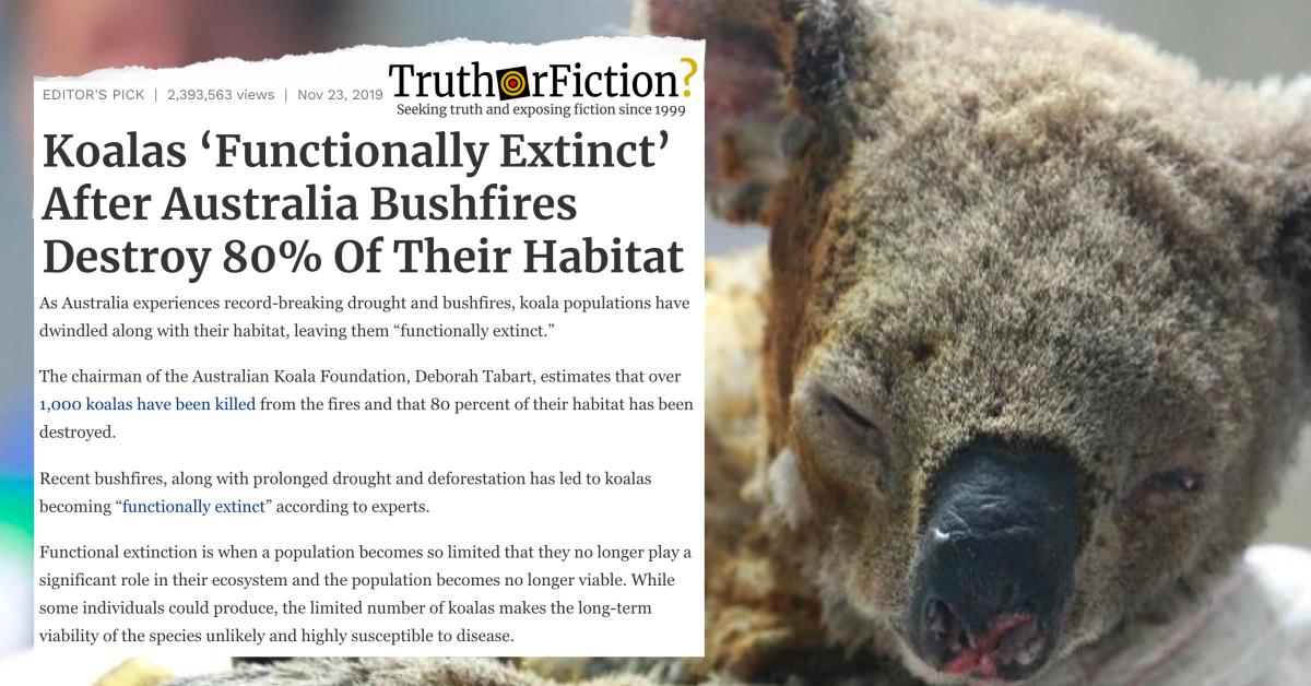 Are Koalas 'Functionally Extinct' as of November 2019?