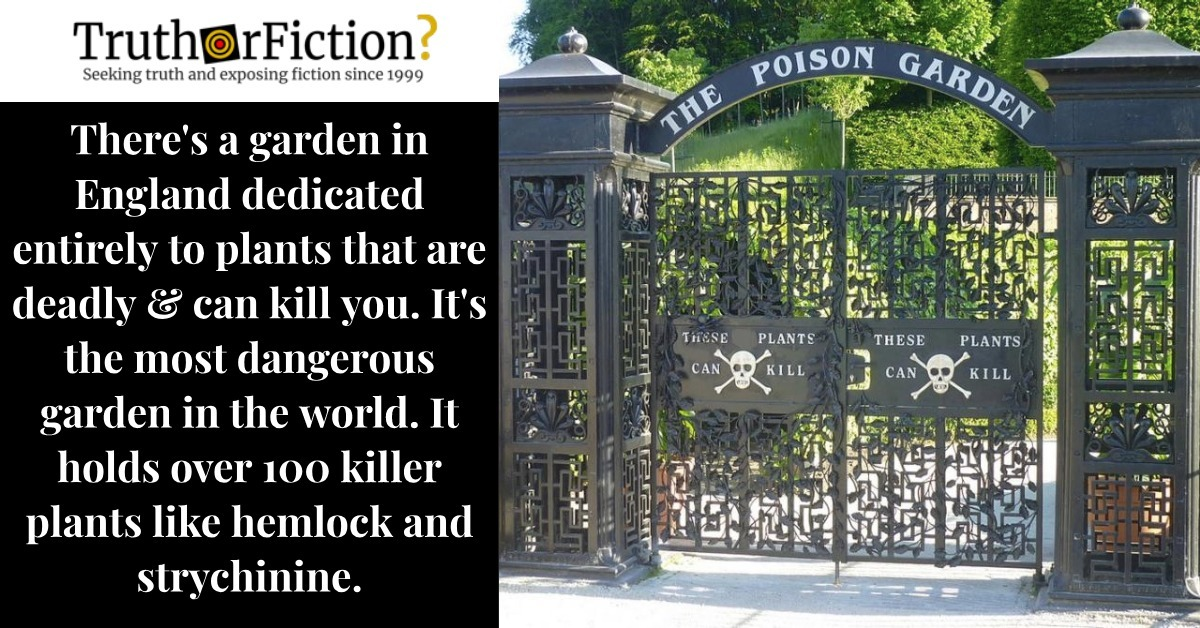 Is There a Garden in England Dedicated Solely to Deadly Plants Called the 'Poison Garden'?