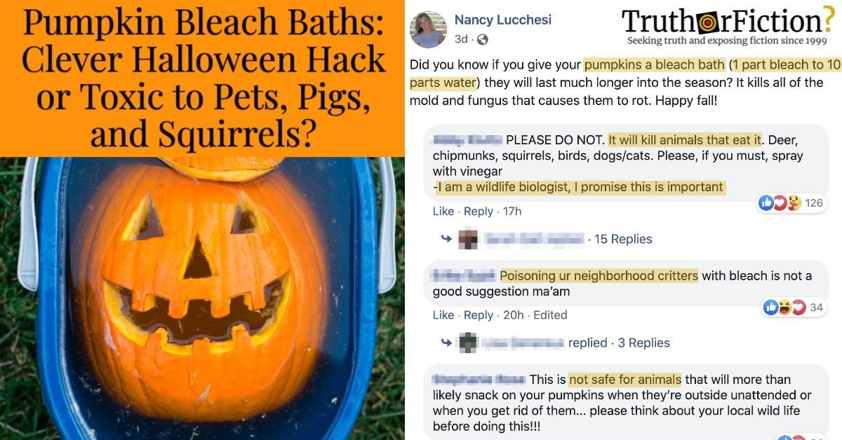 'Give Your Pumpkins a Bleach Bath'
