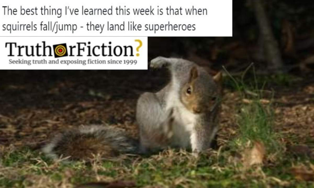 Do Squirrels Land Like Superheroes When They Jump?
