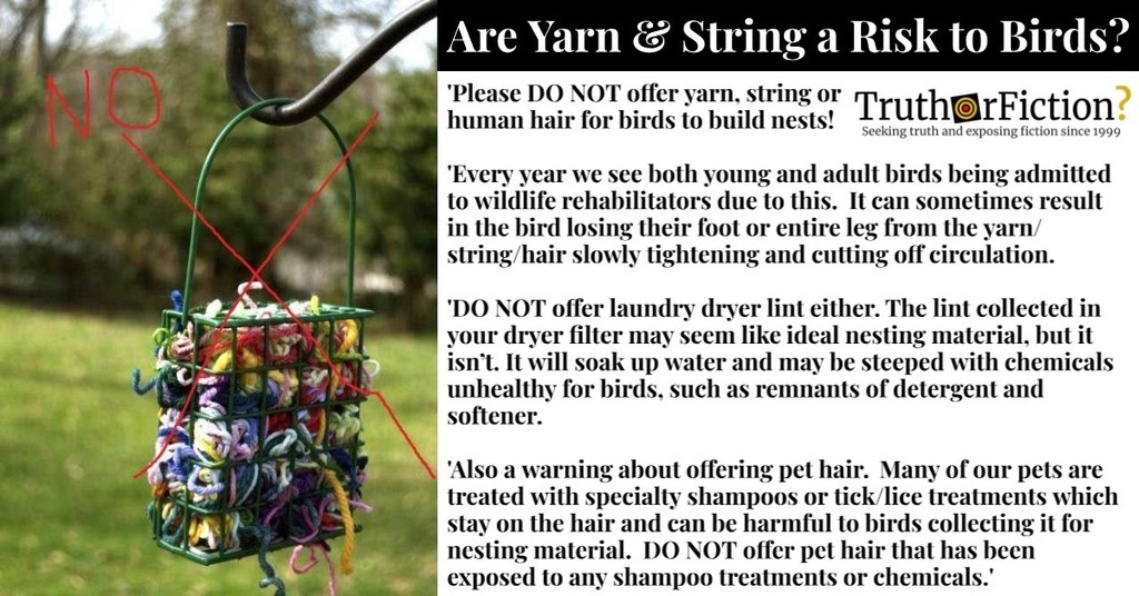 'Please DO NOT Offer Yarn, String or Human Hair for Birds to Build Nests!'