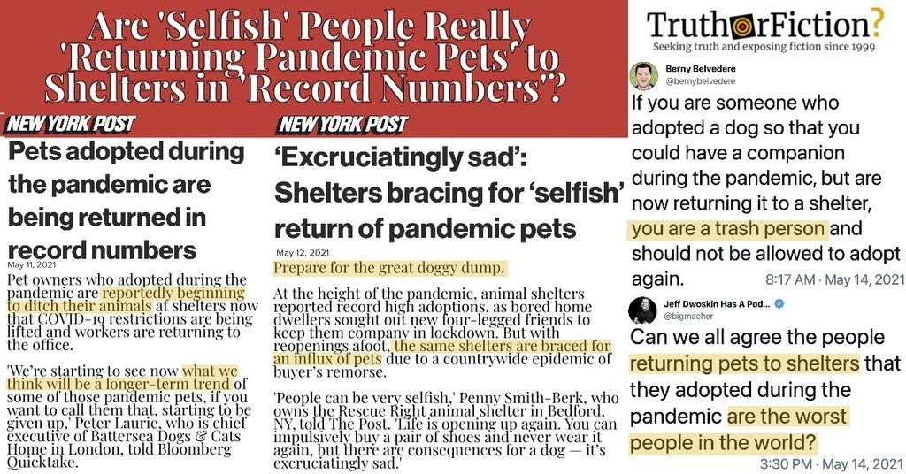 Are People Returning Pandemic Pets?