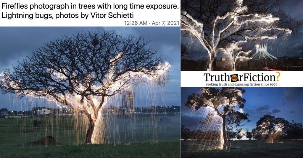 'Fireflies Photographed in Trees with Long Time Exposure'