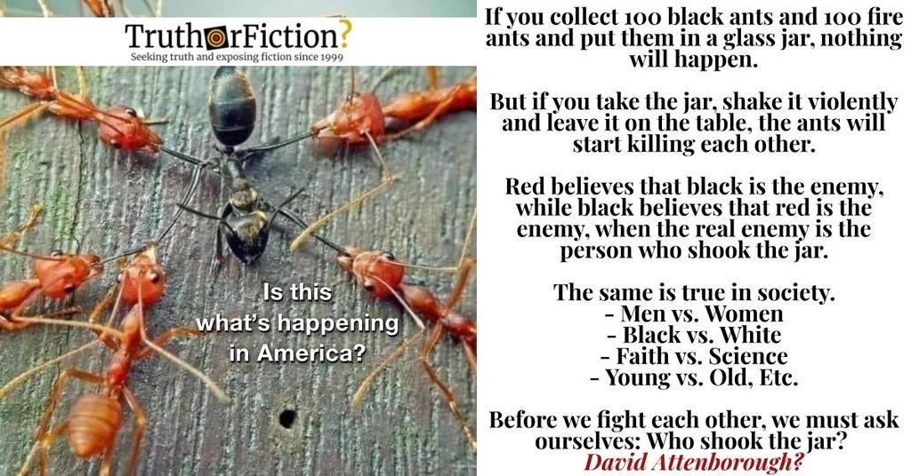 David Attenborough 'Ants in a Jar'