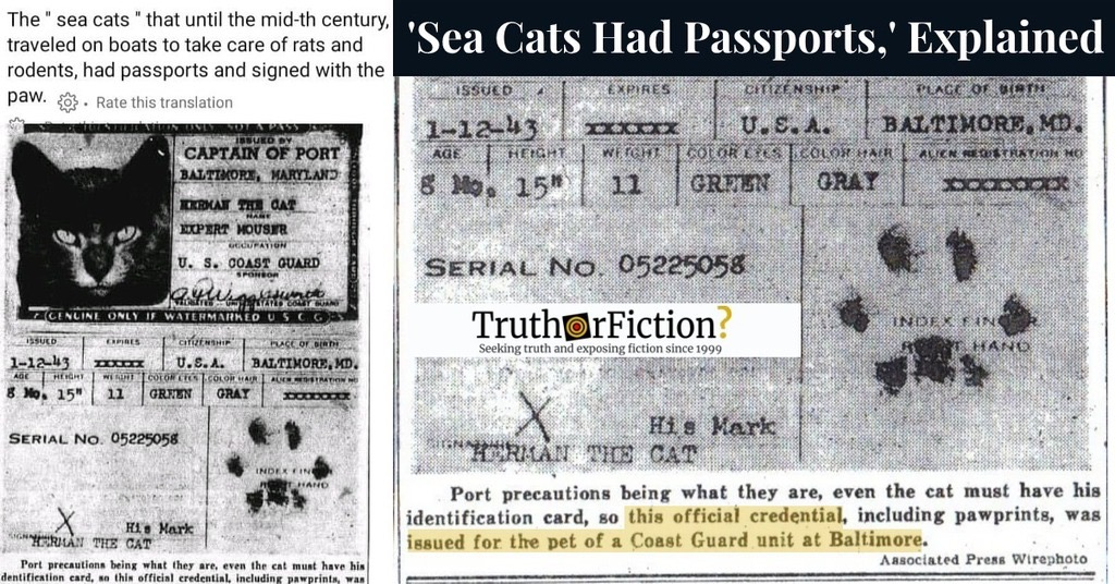 Sea Cats and Passports